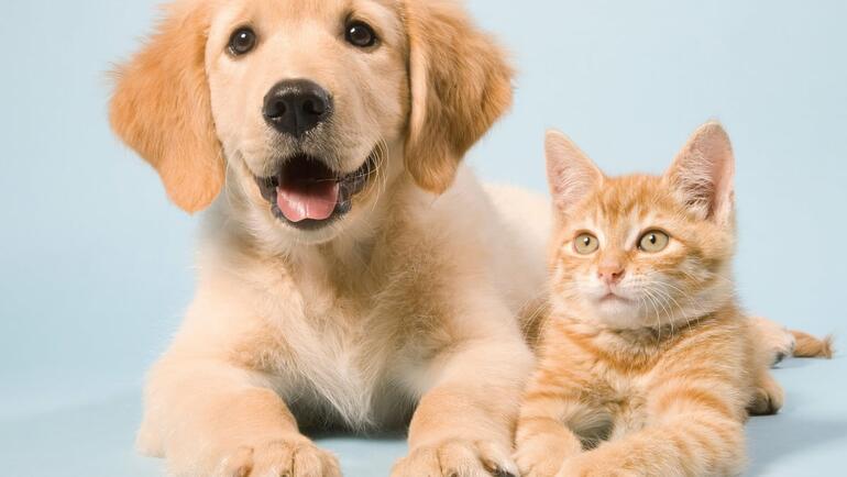 Plan to make pet shipping safe and comfortable